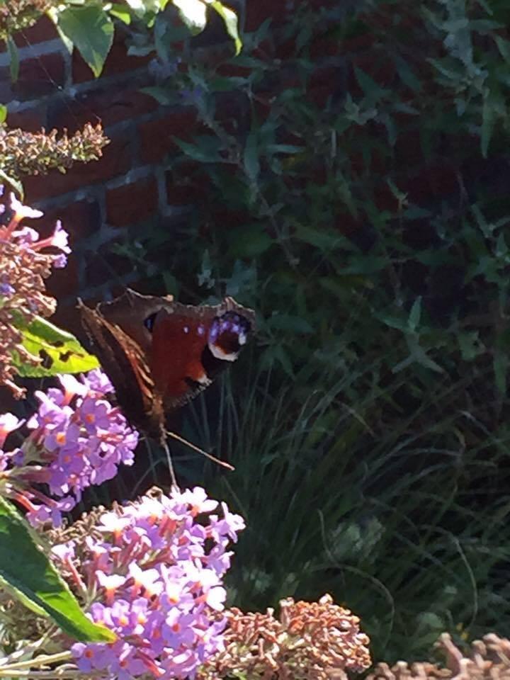 uitzicht op de vlinderstruik